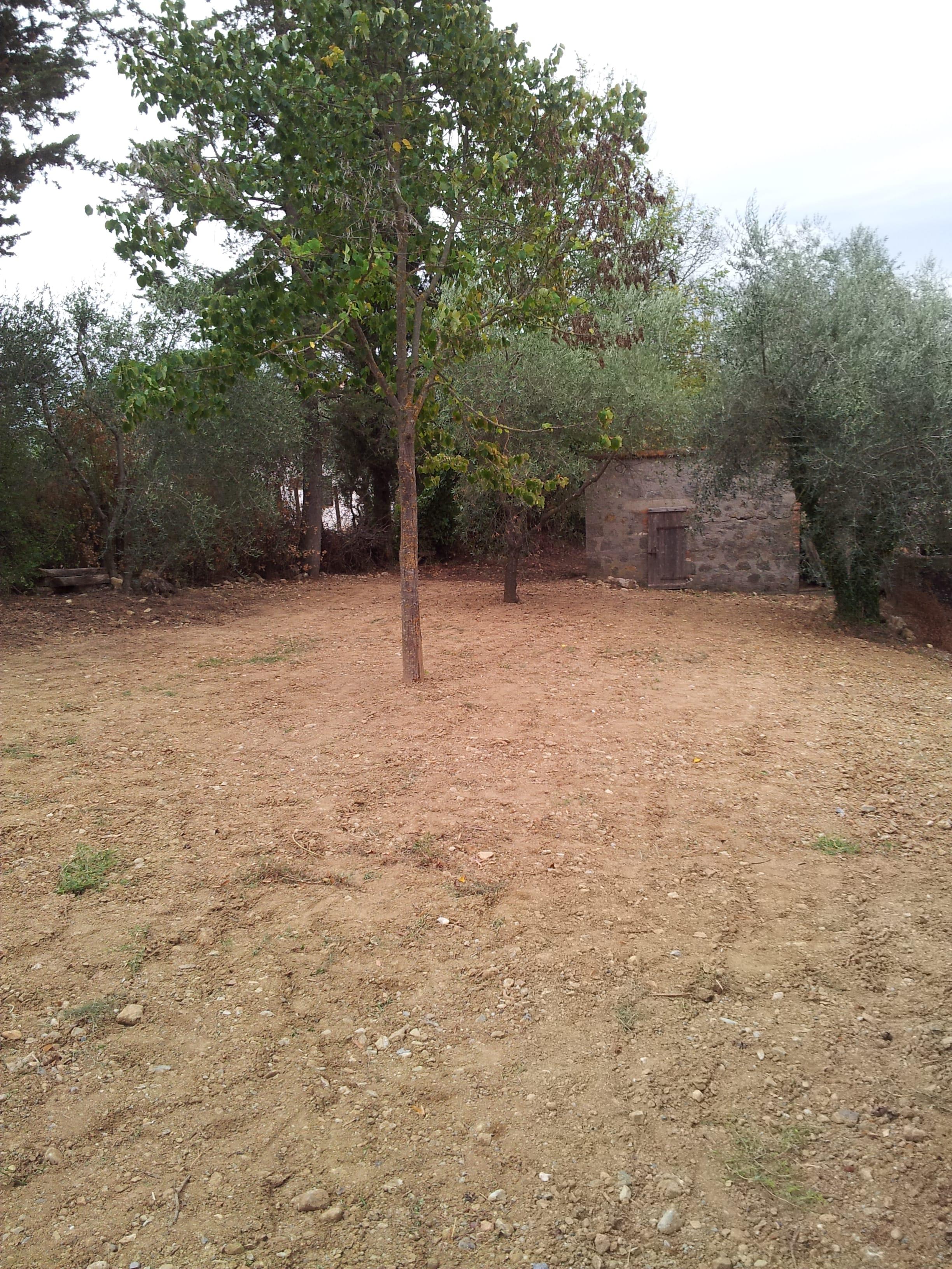 Semina di un prato in oliveto