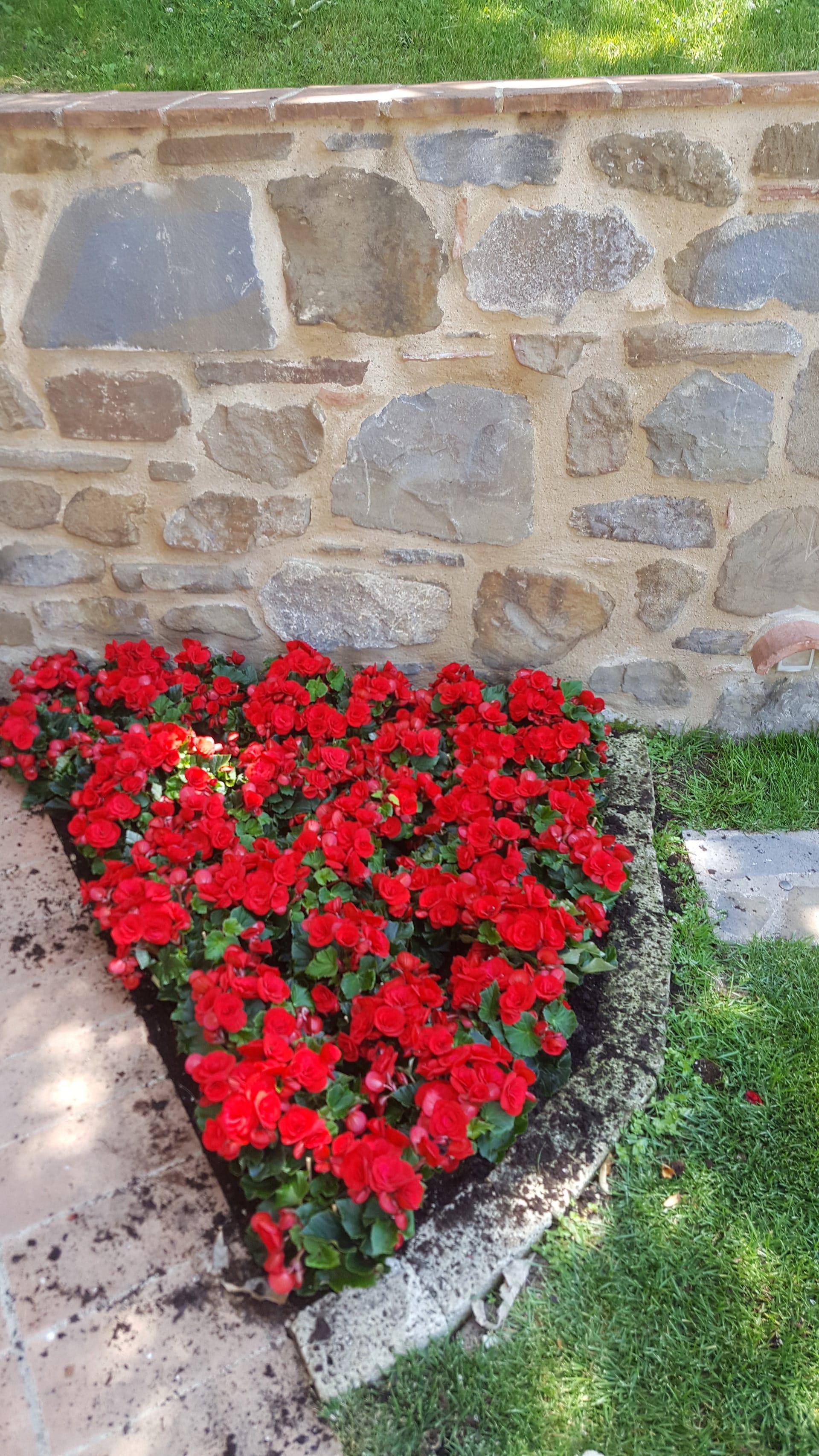 Creazione di aiuole fiorite