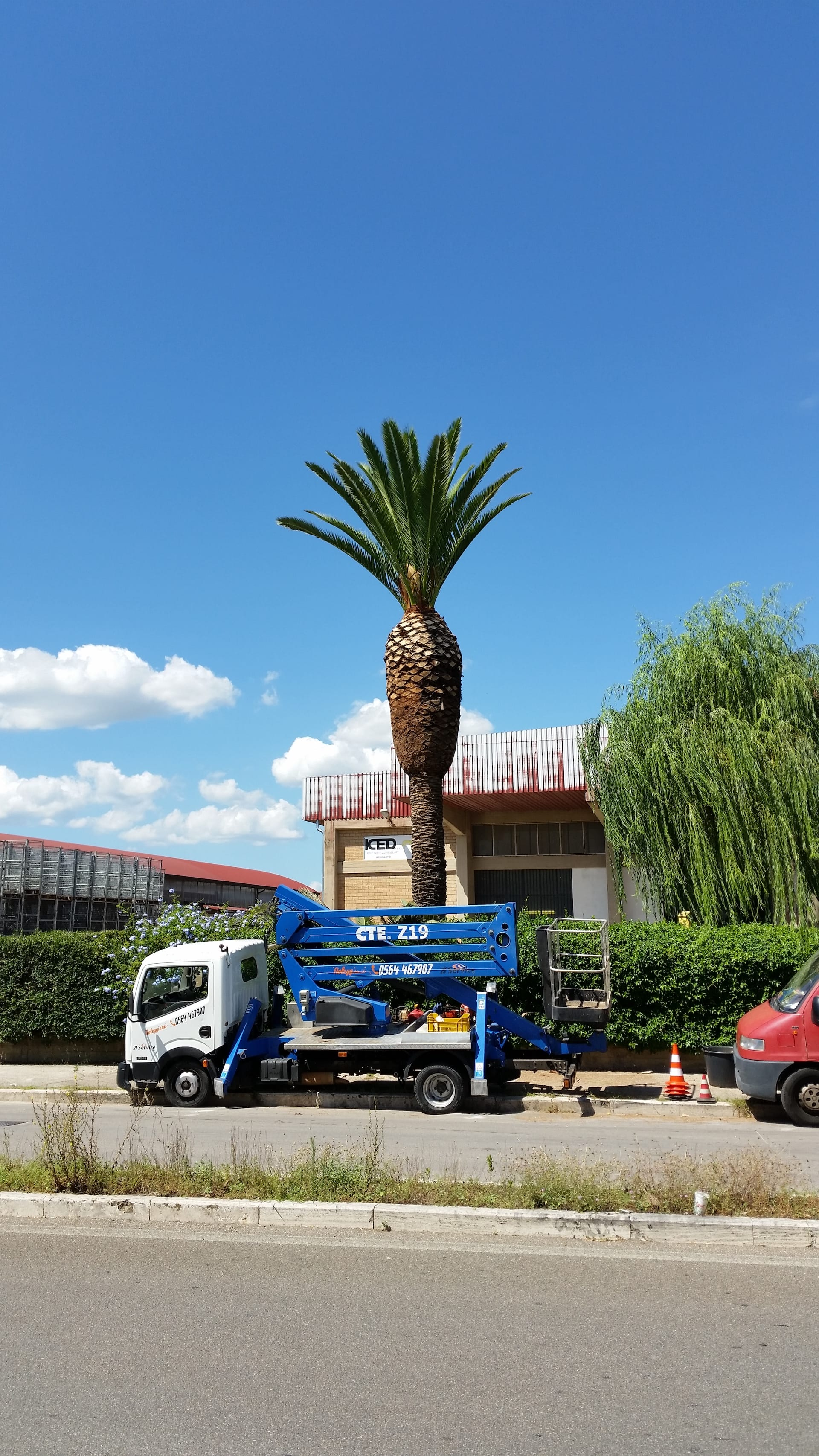 Potatura palme e magnolie con piattaforma aerea